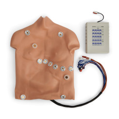 Simulaids® 12-Lead Arrhythmia Simulator with Manikin Overlay - Heartstart - Medium